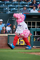 Jacksonville Jumbo Shrimp mascot Scampi during a game against the Biloxi Shuckers on June 8, 2018 at Baseball Grounds of Jacksonville in Jacksonville, Florida.  Biloxi defeated Jacksonville 5-3.  (Mike Janes/Four Seam Images)