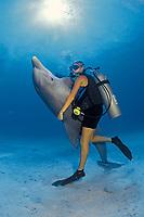 "trainer ""dances"" with captured Atlantic bottle nosed dolphin, Tursiops truncatus, on sandy bottom in open ocean off Grand Bahama"
