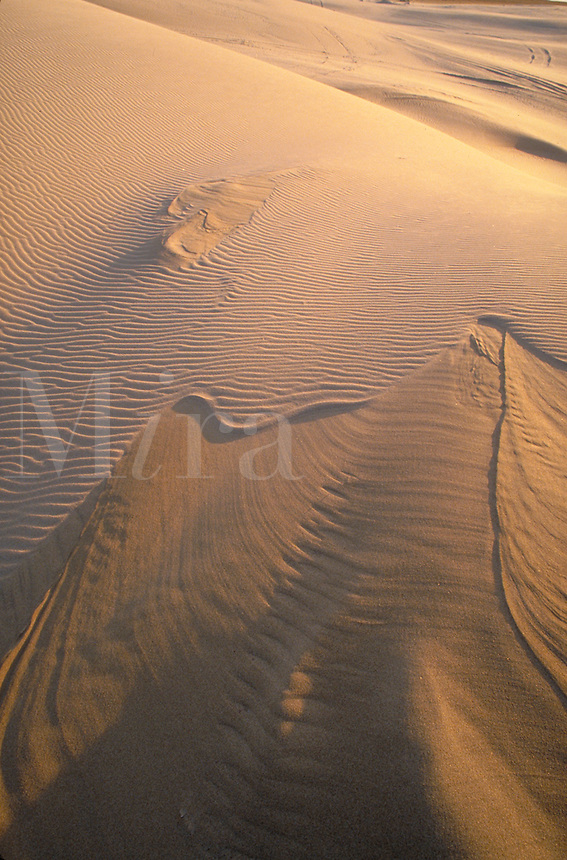 Wind-sculpted sand dunes. Oregon USA Oregon Dunes National Recreation Area.