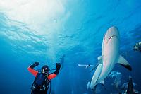 diver Gary Adkison tags a Caribbean reef shark, Carcharhinus perezii, Walker's Cay, Bahamas, Caribbean Sea, Atlantic Ocean