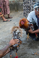 Bali, Indonesia.  Cock Fighting in an Indonesian Village.  Owbers Goad their Birds before Releasing them to Fight.
