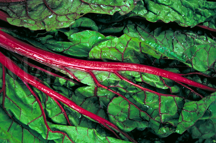 Close up of a beet leaf showing the bright red veins. New Mexico United States Saturday Farmer's Market.