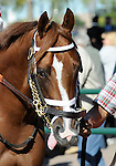 09 September 19: Ruhtro prior to the grade 3 Summer Stakes for two year olds at Woodbine Racetrack in Rexdale, Ontario.