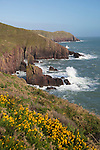 United Kingdom, Wales, Pembrokeshire, Near Manorbier: view to Old Castle Head, in Pembrokeshire Coast National Park | Grossbritannien, Wales, Pembrokeshire, Near Manorbier: Blick zum Old Castle Head, im Pembrokeshire Coast National Park