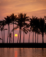 Tropical Sunset Between Coconut Palm Trees, Manoku Fishpond, Big Island, Hawaii, USA.