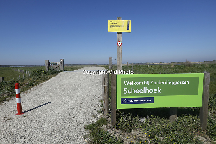 Foto: VidiPhoto<br /> <br /> STELLENDAM – Het nieuwe natuurgebied de Zuiderdiepgorzen bij Stellendam heeft zich in een jaar tijd razendsnel ontwikkeld. Tal van vogelsoorten hebben de pas aan de landbouw onttrokken plek ontdekt en broeden daar nu. Boswachter Ted Sluijter van Natuurmonumenten is zichtbaar enthousiast als hij beschrijft hoe de gloednieuwe met mensenhanden gecreëerde locatie in fluks tempo rijpt. Anderhalf jaar geleden nog ploegden graafmachines het 80 ha. grote landbouwareaal om tot pleisterplek voor 'gebiedseigen' diersoorten. Inmiddels groeit, bloeit en broedt er van alles. Natuurliefhebbers kunnen dankzij een fietspad door het vlakke land van harte mee genieten.
