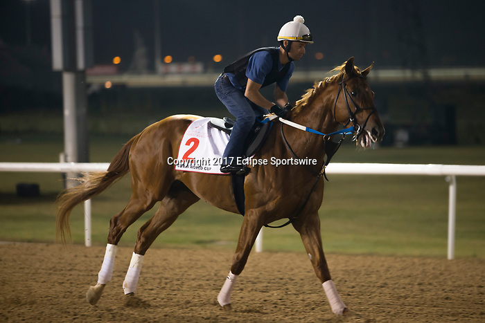 DUBAI,UNITED ARAB EMIRATES-MARCH 23: Gun Runner,trained by Steve Asmussen,exercises in preparation for the Dubai World Cup at Meydan Racecourse on March 23,2017 in Dubai,United Arab Emirates (Photo by Kaz Ishida/Eclipse Sportswire/Getty Images)