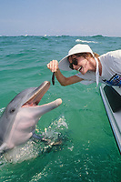 woman feeds bottlenose dolphin, Tursiops truncatus, note teeth, wild but habituated, dolphins come to beg for food off boats, west coast of Florida, Gulf of Mexico, Atlantic, MR