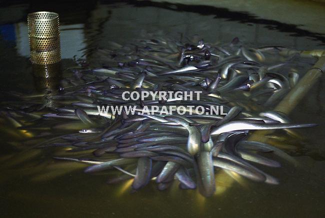 doetinchem 140400 palingkweker Bouwman uit de achterhoek.een voorraadbak met afleverklare palingen. foto frans ypma APA-foto<br />lr1/2oogst17repo palingboer