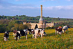United Kingdom, England, Oxfordshire, Chipping Norton: Bliss Mill built as a tweed mill by William Bliss in 1872, grazing cows | Grossbritannien, England, Oxfordshire, Chipping Norton: Bliss Mill, 1872 errichtet als Tweed Muehle von William Bliss