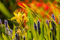 Shades of yellow and green, purple and red: A bright collection of colorful flowers on display at a neighborhood park on a summer afternoon.