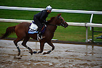 October 28, 2015:  Rated R Superstar, trained by Kenneth G. McPeek and owned by Radar Racing LLC, exercises in preparation for the Sentient Jet Breeders' Cup Juvenile at Keeneland Race Track in Lexington, Kentucky on October 28, 2015. John Voorhees/ESW/CSM