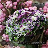 Gisela, FLOWERS, BLUMEN, FLORES, photos+++++,DTGK2338,#F#, EVERYDAY