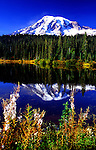 Mt. Rainier reflected in Reflection Lake, Mt. Rainier National Park, USA.  Fireweed in seed in foreground.
