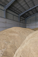 19.7.2021 Winter barley in an on farm grain store <br /> ©Tim Scrivener Photographer 07850 303986<br />      ....Covering Agriculture In The UK....