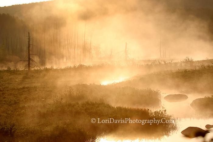 """Morning Fire""  #L17"