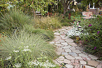Stone path, walkway of recyled concrete and brick in backyard meadow garden with mixed grasses (Miscanthus, Carex, Tripsacum, Pennisetum, Deschampsia) in Southern California
