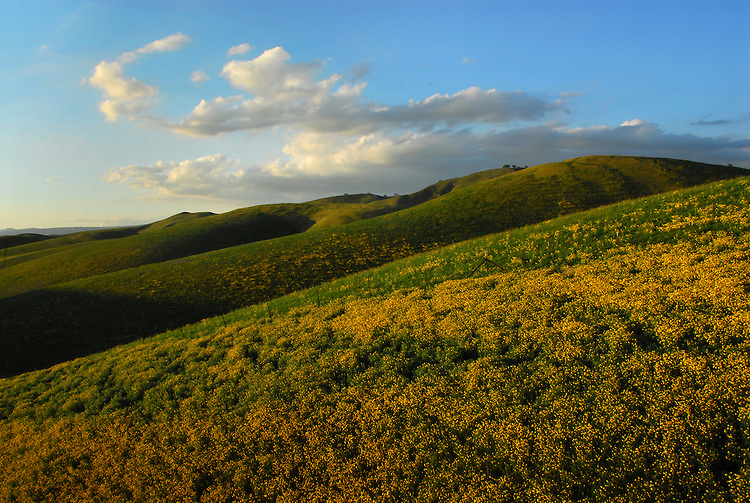 Central Coast foothills