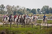 France/13/Bouches du Rhone/Camargue/Parc Naturel Régionnal de Camargue/Saintes Maries de la Mer: Abrivado lors de la Fête des Gitans