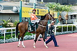Jockey Neil Callan riding Blazing Speed during the Audemars Piguet Queen Elizabeth II Cup at Sha Tin Racecourse on April 30, 2017 in Hong Kong, China. (Photo by Marcio Rodrigo Machado / Power Sport Images)
