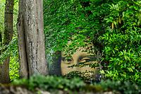 France, Indre-et-Loire (37), Amboise, Jardin et Château du Clos Lucé, la Joconde ou Mona Lisa, reproduction géante accrochée dans les arbres visible depuis la rue