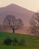 Foggy sunrise in early spring in Cades Cove; Great Smoky Mountains National Park, TN