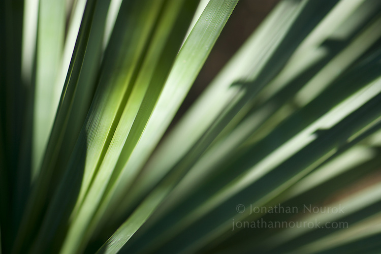 A close-up of a palm frond.