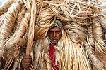 Workers carry heavy jute fibres on their shoulders by Azim Khan Ronnie