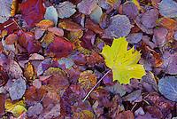 Autumn in Germany, Koenigslutter