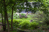 Adirondack chairs on small lawn clearing as seen from woodland with Fraxinus pennsylvanica (green ash or red ash tree) in Taylor garden
