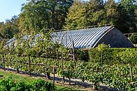 France, Indre-et-Loire (37), Chenonceaux, château et jardins de Chenonceau, le potager, serre chapelle ancienne et pommiers en espalier