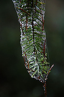 Web, evergreen, pine, needles, branch, Prevost Island, Gulf Islands National Park Preserve, British Columbia, Canada