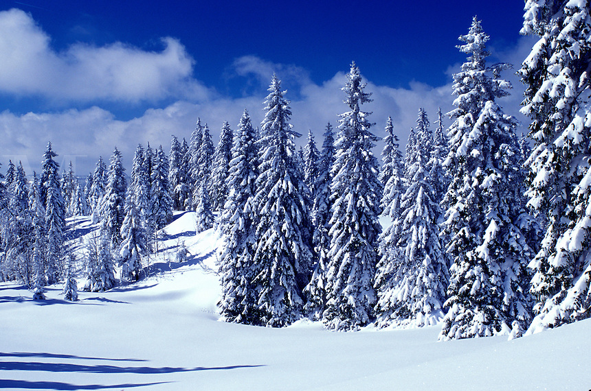 Switzerland, snow, trees, Vaud, Jura Mountains, Europe, An evergreen forest is covered with snow in winter in the Jura Mountains.