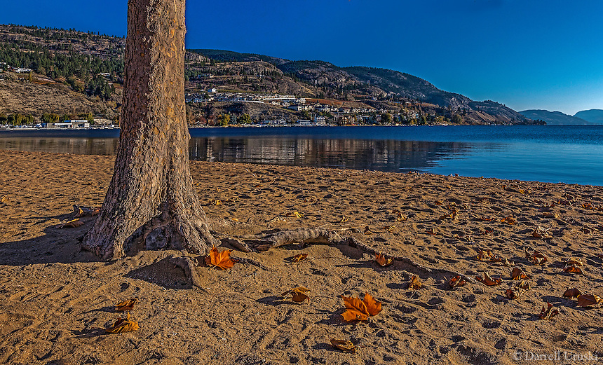 Fine Art Beach Scenic of a few lonely maple leaves left on the beach at Skaha Lake in BC, Canada.