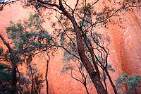 Treescape at Uluru in the Red Centre, Australia