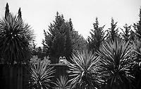 Looking into the Holmes' backyard, 1987.   &#xA;<br />