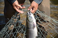 Nondalton Fish Camp