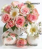 Alfredo, FLOWERS, BLUMEN, FLORES, photos+++++,BRTOLMN28417,#f#, EVERYDAY ,rose,roses