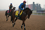 DUBAI,UNITED ARAB EMIRATES-MARCH 23: Zarak,trained by Alain de Royer Dupre,exercises in preparation for the Dubai Turf at Meydan Racecourse on March 23,2017 in Dubai,United Arab Emirates (Photo by Kaz Ishida/Eclipse Sportswire/Getty Images)