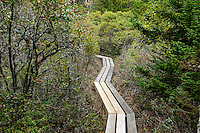 Hiking trail, Acadia National Park, Maine, USA, USA