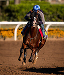 OCT 25: Breeders' Cup Classic entrant War of Will, trained by Mark E. Casse, works out in blinkers, under Joe Talamo at Santa Anita Park in Arcadia, California on Oct 25, 2019. Evers/Eclipse Sportswire/Breeders' Cup