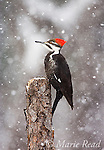 Birds & Snow