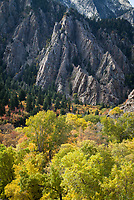Storm Mountain & Trees in Autumn Fall Colors, Big Cottonwood Canyon, Utah, USA.