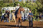 October 28, 2014: Danette works in preparation for the Breeders' Cup Juvenile Fillies at Santa Anita Park in Arcadia, California on October 28, 2014. Zoe Metz/ESW/CSM