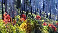 Changing foliage above Yosemite Valley approaching Wawona.