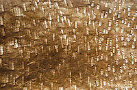 A close-up view of kapa (or tapa) made from paper mulberry bark by Roen Hufford, Big Island.
