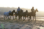 August 15, 2021, Deauville (France) - Horses from the Barrière Deauville Polo Cup training at the beach in Deauville. [Copyright (c) Sandra Scherning/Eclipse Sportswire)]