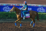 October 27, 2014:  Rainha Da Bateria, trained by Graham Motion, exercises in preparation for the Breeders' Cup Juvenile Fillies Turf at Santa Anita Race Course in Arcadia, California on October 27, 2014. John Voorhees/ESW/CSM