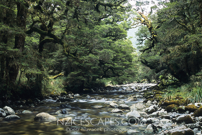 Taipo River near Taipo Hut on the Wangapeka Track - Kahurangi National Park