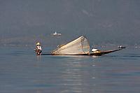Myanmar, Burma.  Fisherman Coasting with his Net, Looking for Fish.  Inle Lake, Shan State.